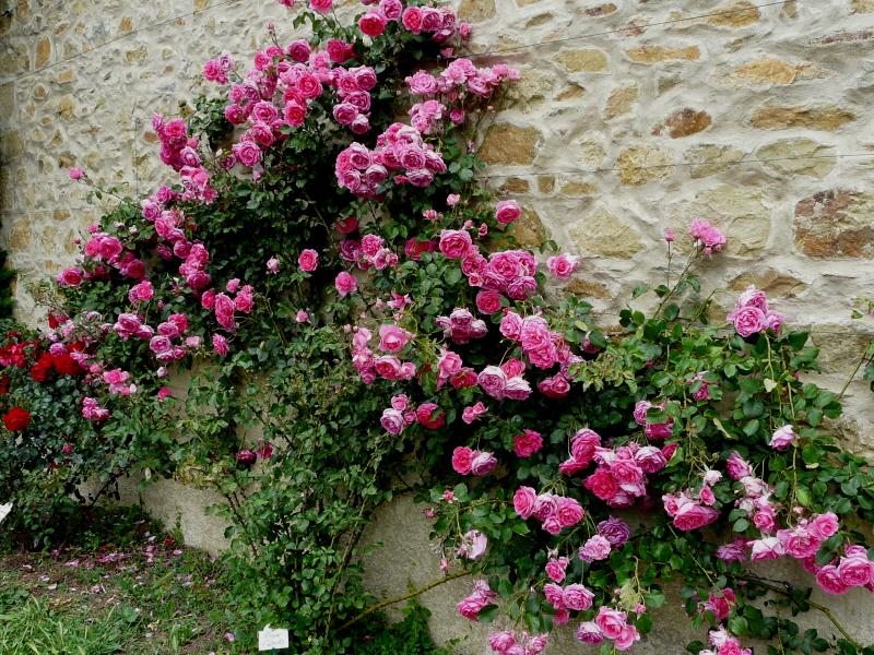 pink-cloud-abbaye-de-valisantes