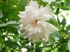 bloomfield-abundance-a