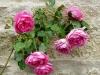 pink-cloud-abbaye-de-valisantes-1