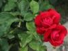 alecs-red-1374