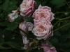 blossomtime