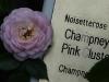 champneys-pink-cluster