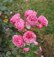 lolita-lempicka-bagatelle-268