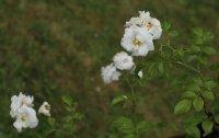 sanders-white-bagatelle-087