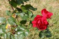 centenaire-de-lourds-rouge-289