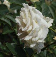 clos-fleuri-blanc-283