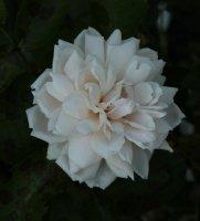 irena-sendlerowa-jpga_