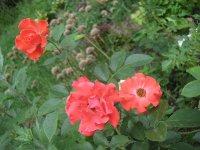 clos-fleuri-vermillion