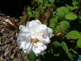 quatre-saissons-blanc-mousseux