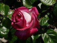 baroness-rotschild