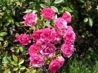 perla-de-alcanada-ogrod-botaniczny-warszawa-192.jpg