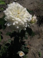 nadine-xella-ricci