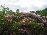 marguerite-hilling-27-05-3