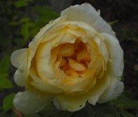 yellow-romantica-kolekcja-w-3
