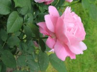 mary-rose-2_0