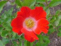 eyepaint-z-elko-roses.jpg