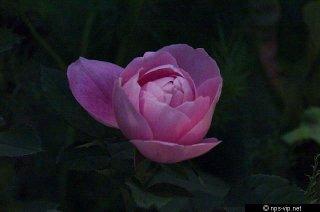 baroness-rotschild-fharrell.jpg