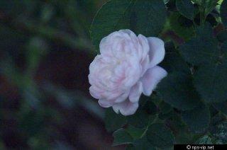 pompon-blanc-parfait-fharrell.jpg