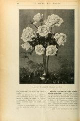 earl-of-warwick-journaldesroses1911-3