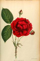 g-dubose-journaldesroses1911-6