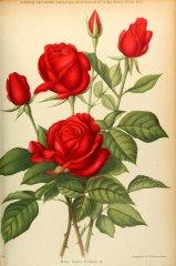 kaiser-wilhelm-ii-journaldesroses1911-2
