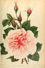 mme-segond-weber-journaldesroses-1910-6