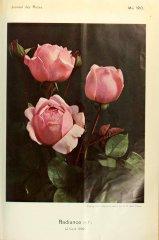 radiance-journaldesroses-1910-5
