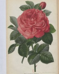 comtesse-doxford-1880-6