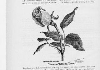 duchesse-mathilde-jdr-1880-11
