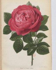 la-reine-1880-3