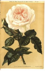 souvenir-de-malmaison-jdr-1879-5