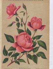 charles-de-legrady-1887-7