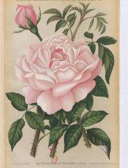clara-cochet-1886-10
