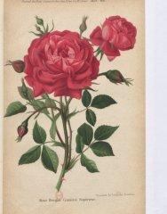 cramoisi-superieure-1883-8