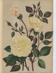 duchess-de-bragance-1887-1