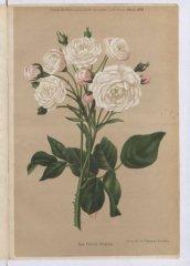 felicite-perpetue-1884-4