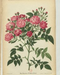 mmle-blanche-rebatel-1889-2