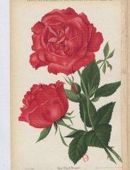 ulrich-brunner-1888-7