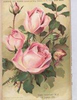 gustaw-grunerwald-1905-6