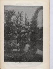 kaiserin-augusta-vicktoria-cl-1901-3