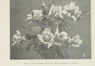 mme-pol-varin-bernier-1907-1