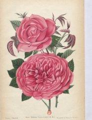 mme-verier-cachet-1901-7