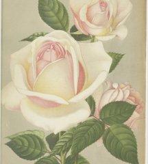 qeen-of-spain-1907-5