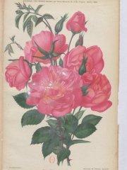 rene-andre-1903-10