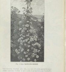 taunusblumchen-1902-11