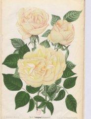 g-nabonand-1892-7