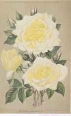 kaiserin-augusta-victoria-1896-4