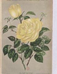 louis-leveque-1896-12