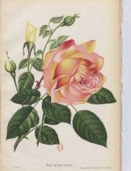 louis-leveque-1896-7