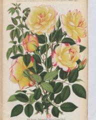 mlle-adelina-viviand-morel-1890-7